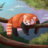 Cute Digital Children's Illustration of a Grumpy Red Panda in a tree
