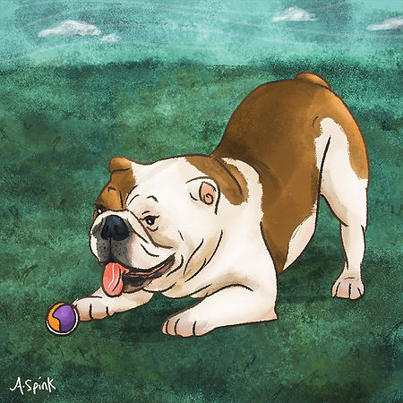 Colourful Illustration of a bulldog dog character for the Daily Doggy Doodle Series. Dog.