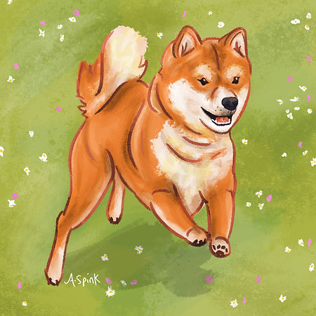 Colourful Illustration of a Shiba Inu dog character for the Daily Doggy Doodle Series.