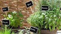 plantes-aromatiques-decorer-un-balcon_50