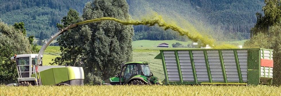 Harvesting-of-whole-crop-silag.jpg