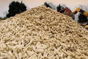 feedstock-beet.jpg