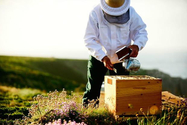 Beekeeper harvestiing