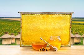 Honey in glass bowl, wooden honey dipper