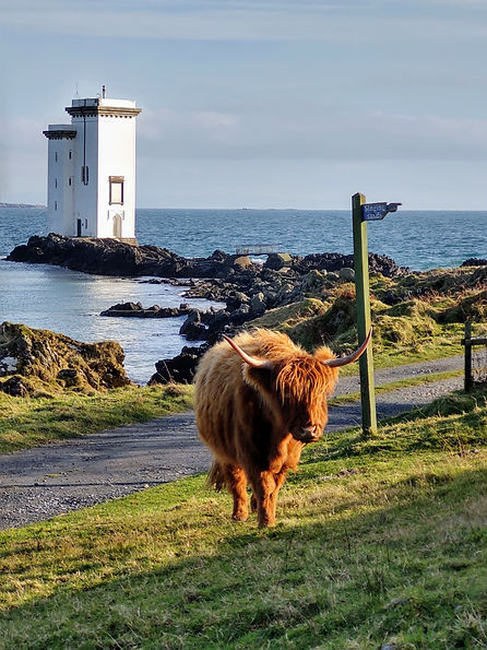 Holiday Homes Islay - Harry Highland Cow