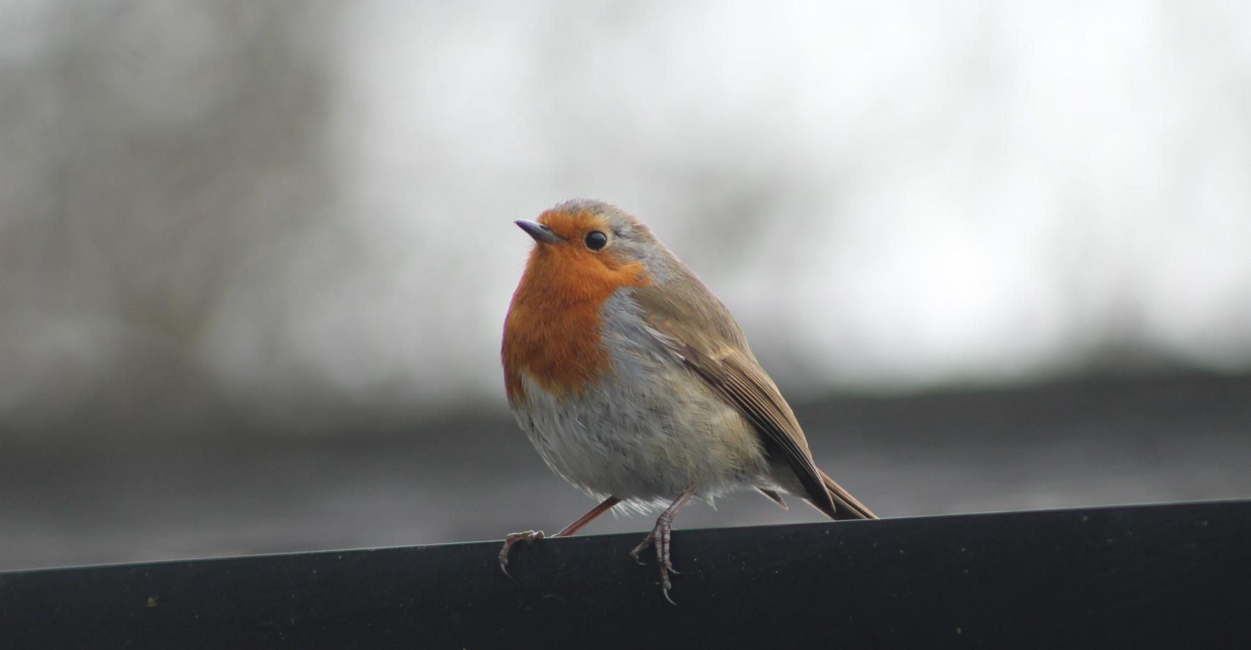 HHI Robin