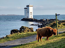 Holiday Homes Islay - Highland Cattle