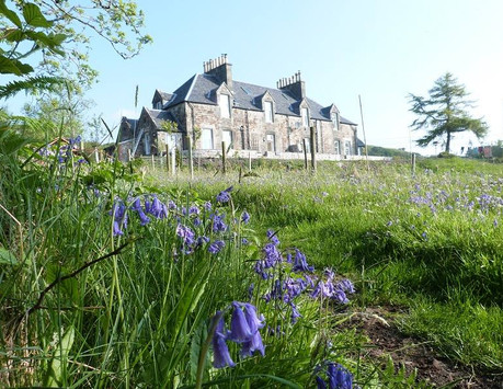 Bluebells at The Dower House