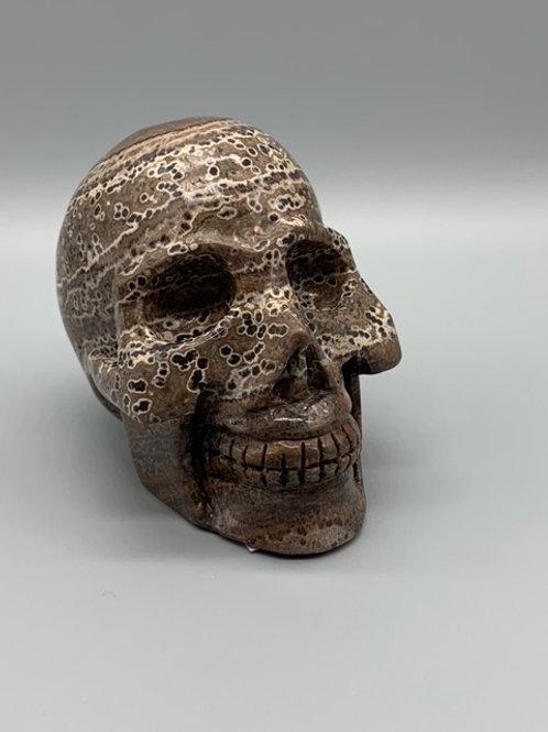 Brown Oolite Skull