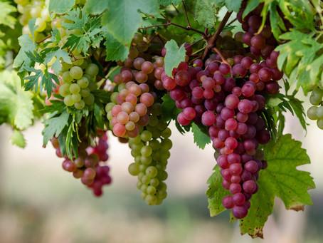 Особенности винограда