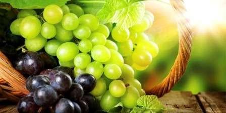 Саженцы столовых сортов винограда с доставкой почтой по всей Украине. Высокое качество, гарантия соответствия сортности!