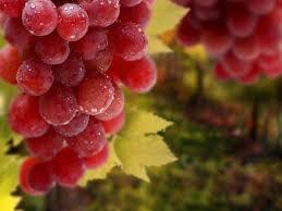Розовые сорта винограда