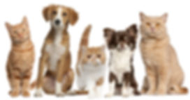 bigstock-Group-of-cats-and-dogs-in-fron-