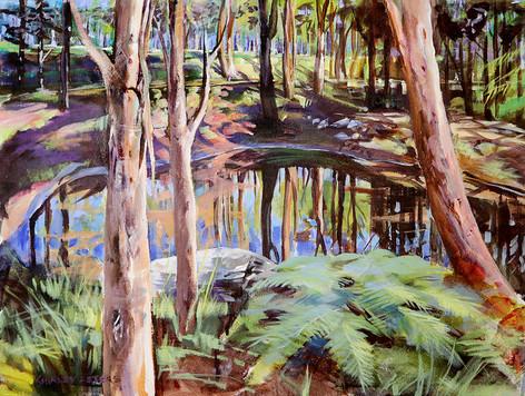 Backyard Dam with Living Trees