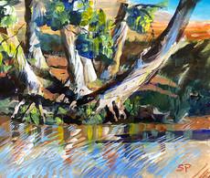 River Gums in Low Light $340