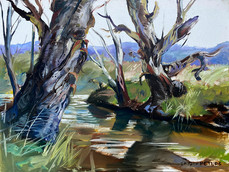 River Sentinals