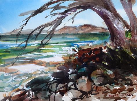 Swansea Tree Beach