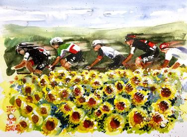 Stage 16 - Sunflowers