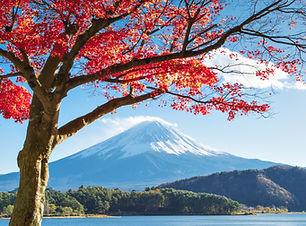 Fuji Autumn.jpg