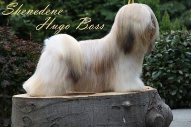 Shenedene Hugo Boss