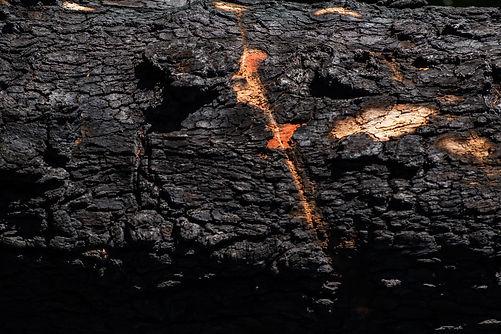 20200716_bushfire_recovery-dscf8697jpg_5