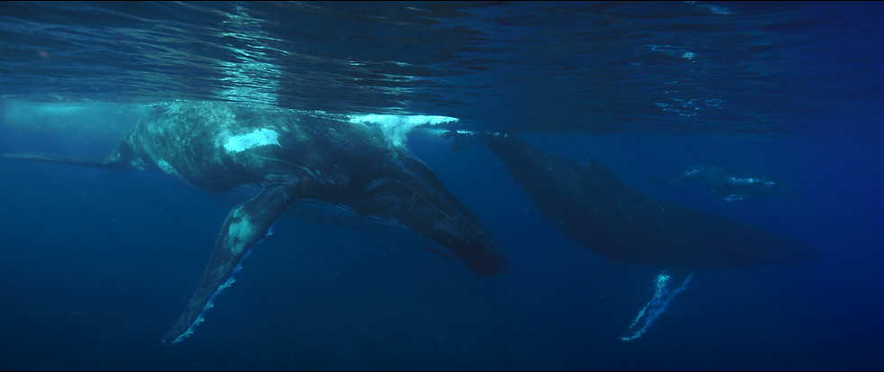 Whale_3.png