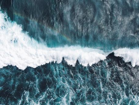 WA UPDATE: We need you, Ocean lovers!