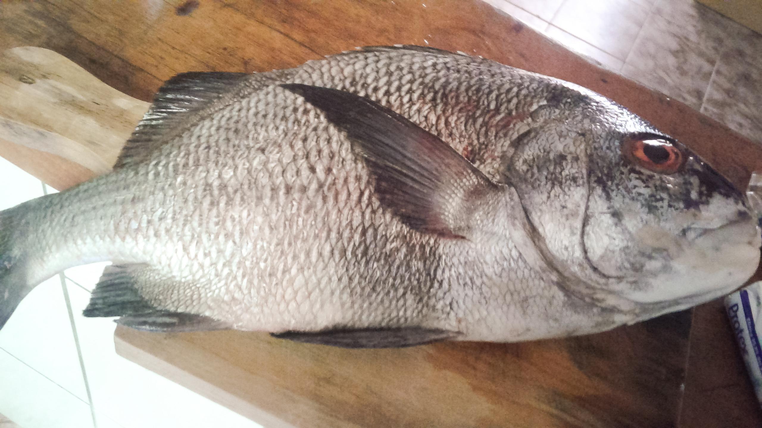pescaria-ilha-grande-1