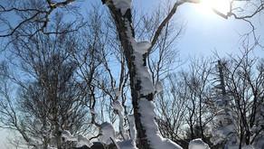 青い空と新雪の奥手稲山