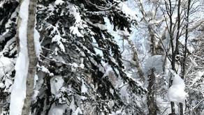 パウダースノーを堪能した千尺高地