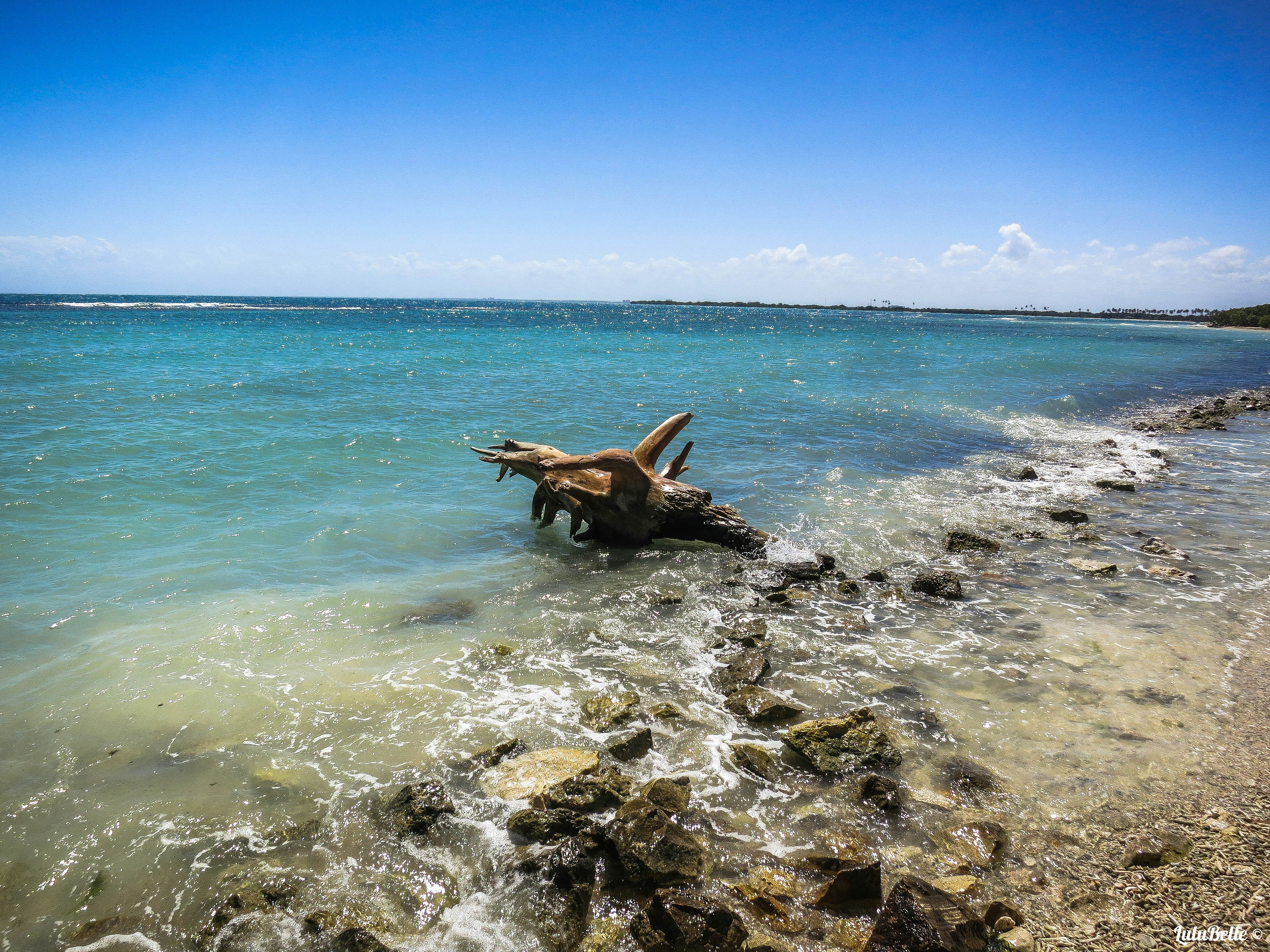 Caribbean driftwood, A2A Expedition