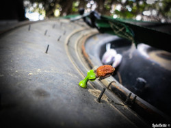 Plant growing on tyre, A2A