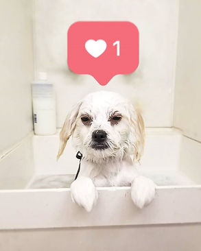 I think she likes her bubble bath.._🛀🐶