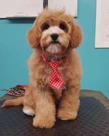 Mr. Best Puppy of the month! _Brody did