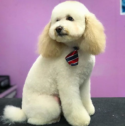 Buddy was a gentleman for his haircut. ?