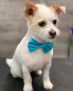The very handsome Teddy! #terrier #jackr