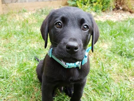 Bringing Pup Home