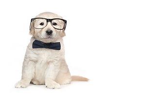 Golden Retriever Cute Puppies.jpg