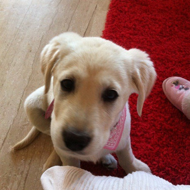 puppy visit
