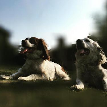 Harry & Heidi