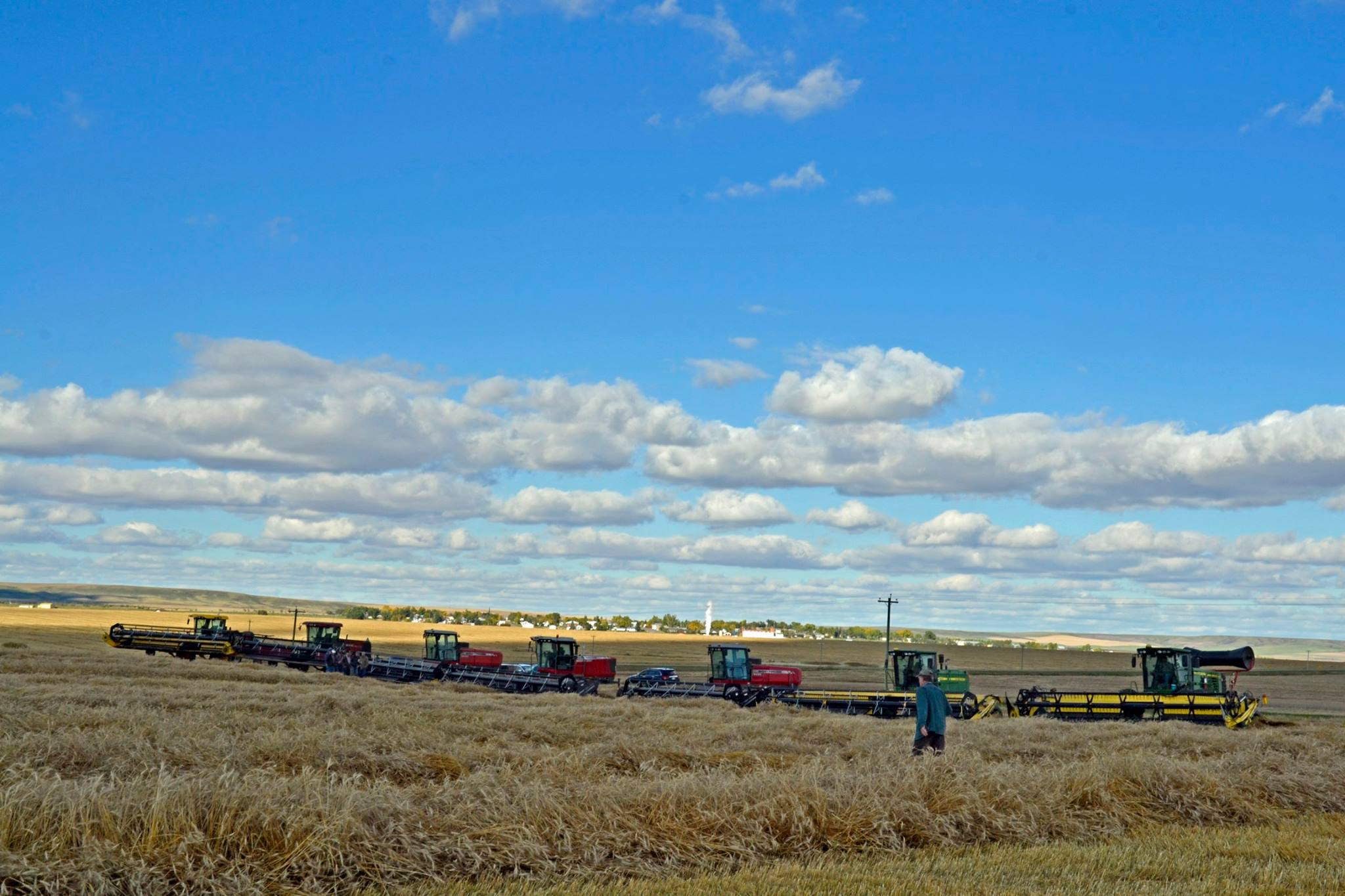 Swathing Memory Lane Crop