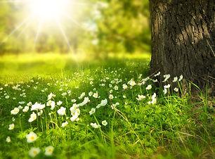 fleurs blanches dans un prairie au pied d'un arbre avec le soleil qui brille, naturopathie, santé natuelle, Symptômes Immunité Sommeil, insomnies, apnée du sommeil Fatigue chronique, épuisement, burnout, bore out Problèmes digestifs, inflammations gastriques digestives, intestinales Microbiote, colles, mucosités, acidité, acidose, acidose tissulaire, acidification, oxydation, cristaux, déminéralisation Stress oxydatif, radicaux libres Carences nutritionnelles, sédentarité, hypoxie, oxygène, respiration, pneumologie, cohérence cardiaque, respirations abdominales, diaphragme Maladies chroniques Asthme, allergies Eruptions cutanées, eczéma, psoriasis, mycoses, verrues, fongique, candida albican, levures Equilibre acido-basique Terrain acide, acidité, acidifiant Inflammation chronique, de bas grade, de haut grade Pathologies inflammatoires, tendinites, capsulite, bursite, épaule, tennis elbow, entorse Douleurs articulaires, arthroses, arthrites Intolérances alimentaires