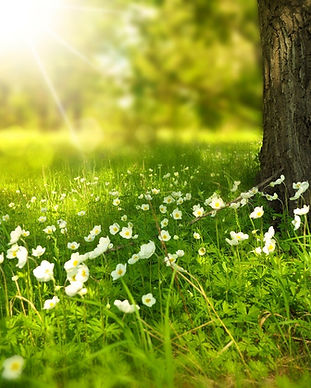 fleurs blanches dans un prairie au pied d'un arbre avec le soleil qui brille, naturopathie, santé natuelle, accompagnement global, accompagnement holistique, approche combinée, sonothérapie, naturopathie, fleurs de bach, Liberté, progressivité Programme global, rythme Cadre confidentiel, confidentialité, sécurité, sécurisé Autonomie, responsabilisation Écoute empathique, empathie, bienveillance, bienveillant Besoins, sentiments, demandes, CNV, communication non violente EFT, emotional freedom technique Echanges, interaction Guidance intuitive, guider, intuition Se connecter, connexion, pouvoir intérieur, intériorité, liberté, libre, être Humanité, humains Authenticité, profondeur, relation de confiance