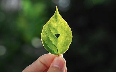 feuille d'arbre avec un trou en forme de coeur en son centre