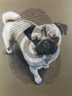 Edith the Pug