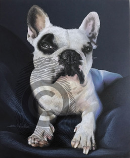 Spotted French Bulldog