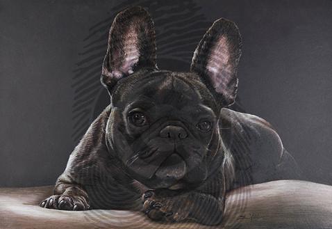 Oscar French Bulldog