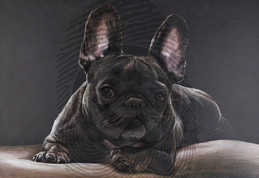 Oscar French Bulldog