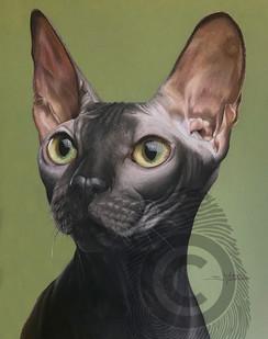 hairless_cat.jpg