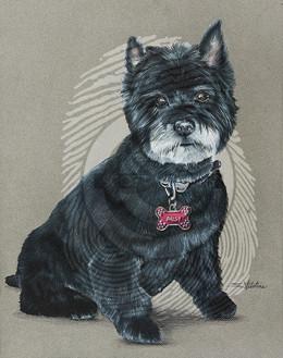 Daisy Cairn Terrier